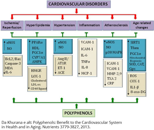 Major molecular targets used by polyphenols in cardiovascular protection.